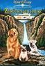 Homeward Bound - Zurück nach Hause (DVD) kaufen