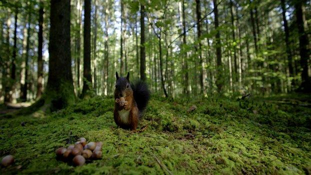 Terra X - Unsere Wälder