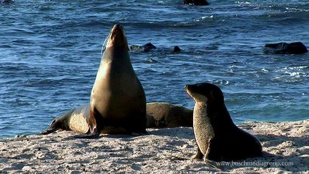 Die schönsten Naturreisen der Welt - Galapagos & Ecuador erleben