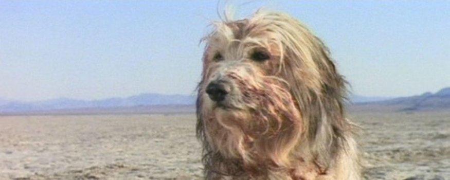 Der Junge und sein Hund - Apocalypse 2024