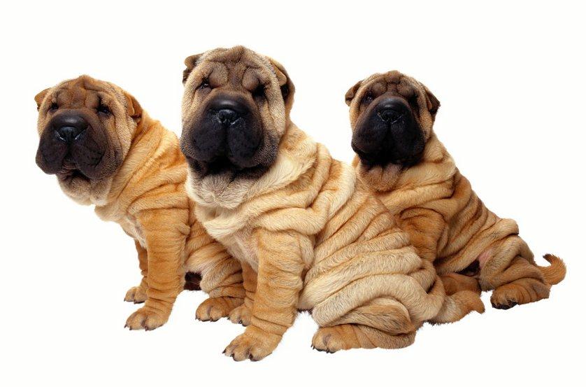 Hunde Abc