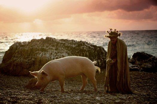 Seine Majestät das Schwein