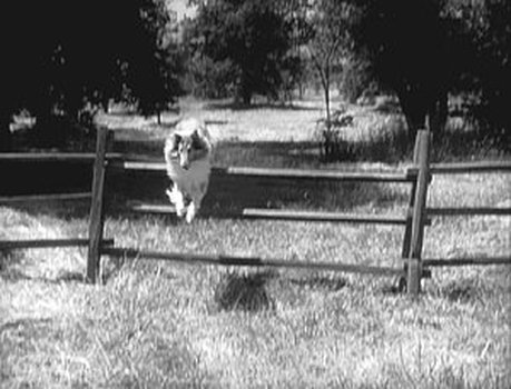 Lassie - Volume 1