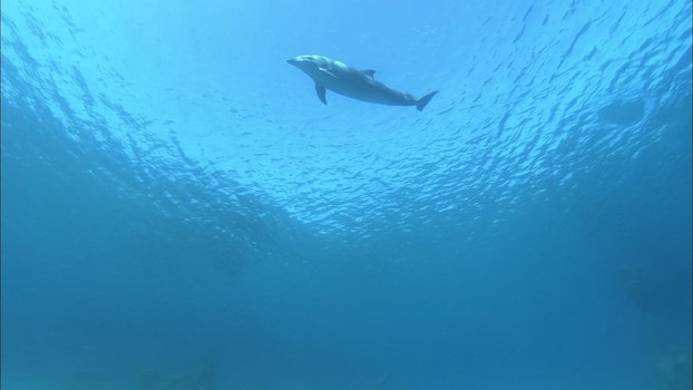 Dolphins in the Deep Blue Ocean