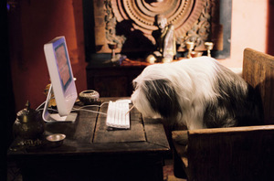 Jetzt wie 'Shaggy Dog' (2006) online DVDs aussuchen!