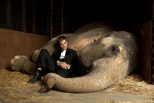 Robert Pattinson in 'Wasser für die Elefanten' © 20th Century Fox 2011