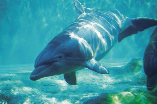 Die Delfinschule