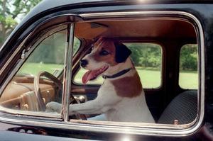Autofahren wie 'Mein Hund Skip' (2000) nicht nötig: die Filme kommen per Post.