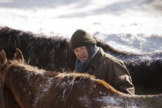Ruf der Pferde