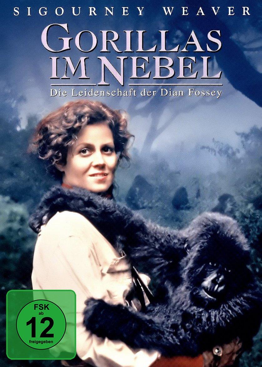 Gorilla Im Nebel