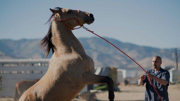 The Mustang - Der Mustang