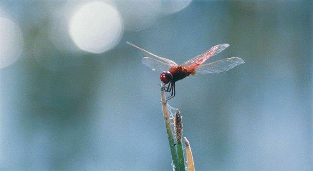 Das Wunder der Natur