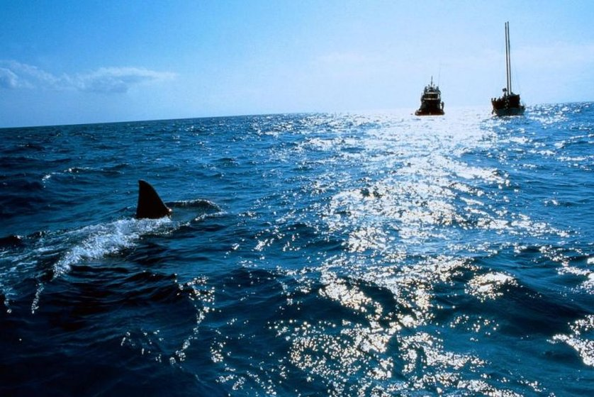Der Weiße Hai 4 Stream