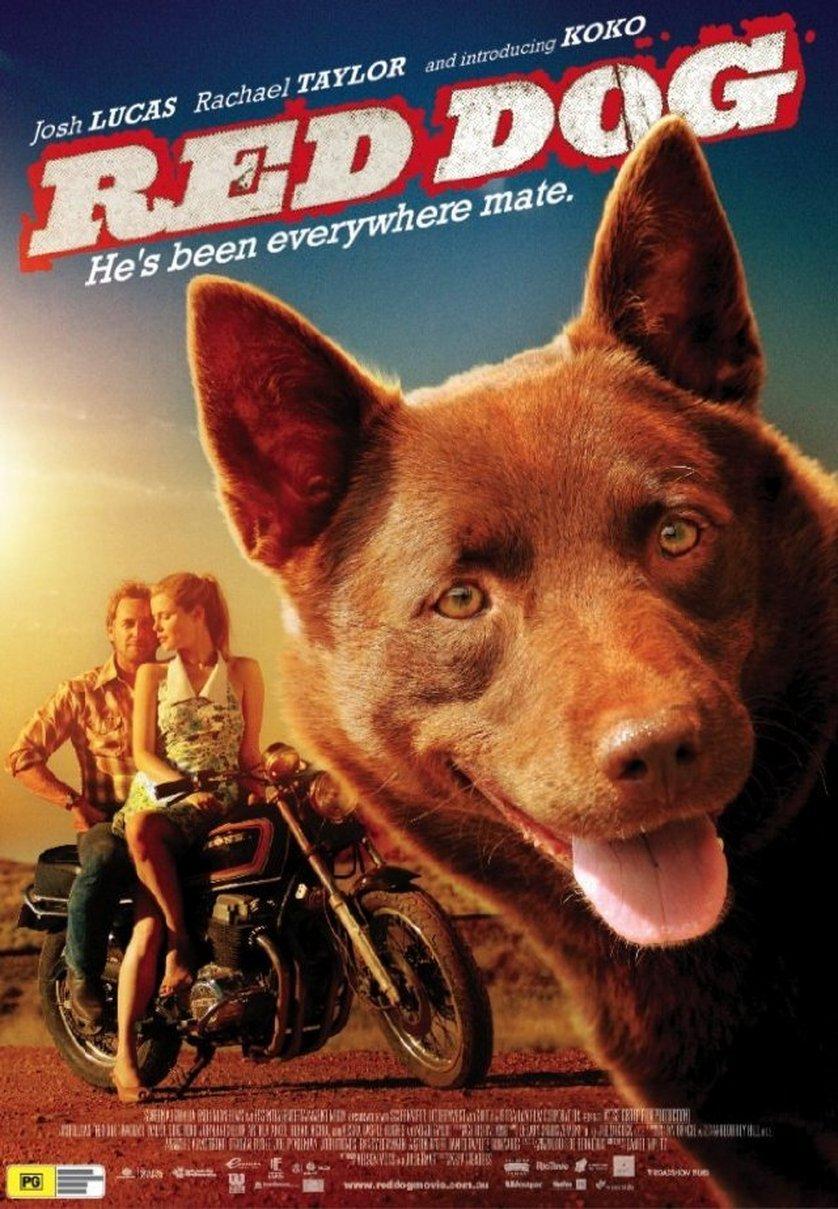 Red Dog Ein Held Auf Vier Pfoten