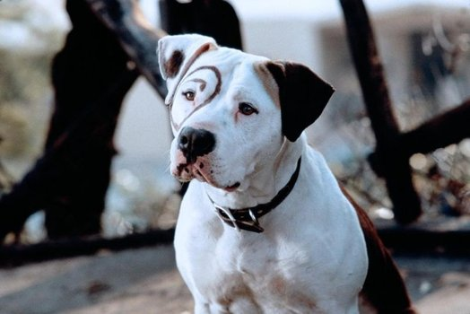 Name Of The Dog On The Little Rascals