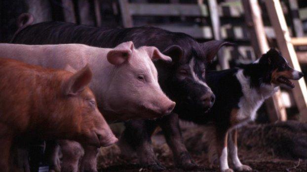 Animal Farm - Farm der Tiere