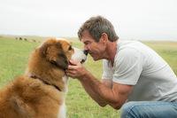 Hund 'Bailey' mit Dennis Quaid
