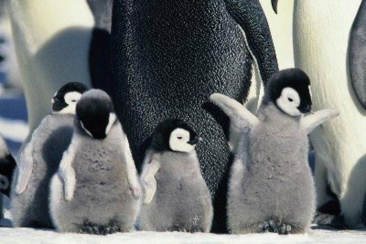 Die verrückte Reise der Pinguine