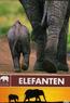 Safari - Elefanten
