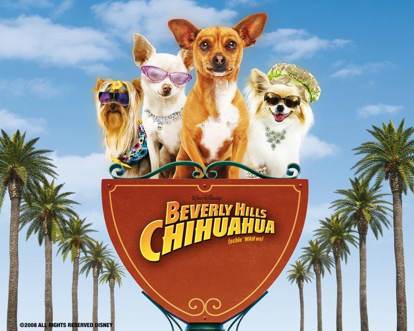 beverly hills chihuahua  dvd oder blu-ray leihen