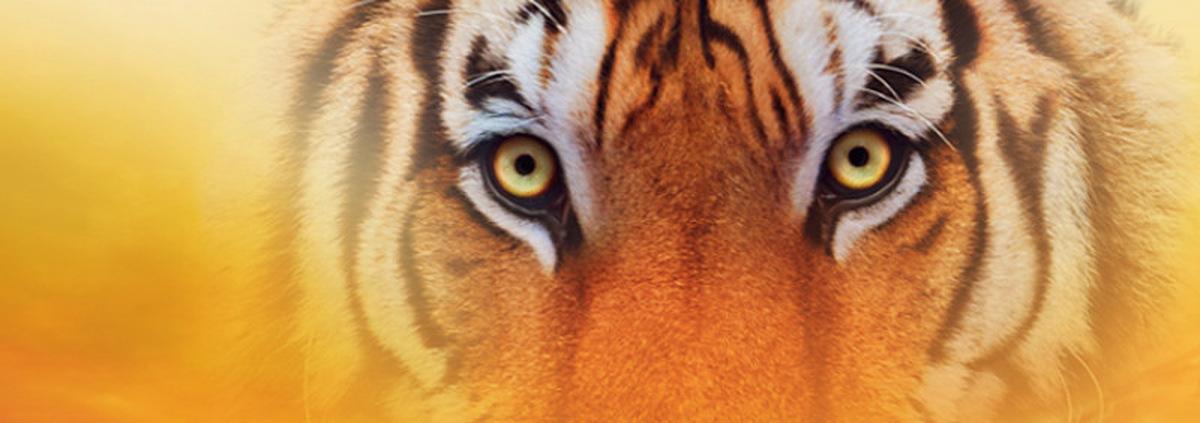 Tiger-Collection: Wetzen Sie Ihre Krallen, wir lassen den Tiger raus!